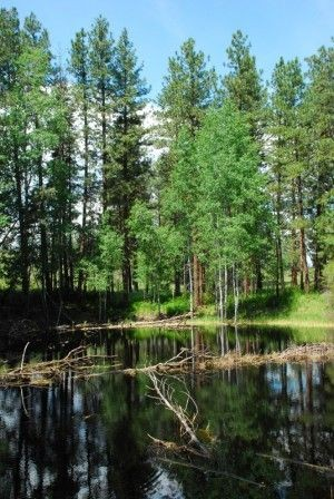 Comparing Conifers and Deciduous Trees - WNPS Blog ...
